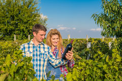 Man and woman in a vineyard. Man and women drinking wine in a vineyard Stock Photos