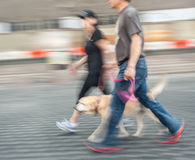 Man and woman walking with a dog Royalty Free Stock Image