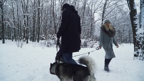 A man and a woman walking with huskies holding them on a leash pass by each other in a winter snow-covered park. Dogs on stock footage