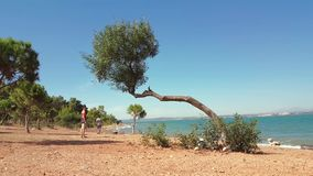 Man and woman walking separately along a promenade on a sunny day. Man and woman walking on an unimproved road with trees near the sea on a windy summer day stock video