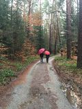 Man and woman walking with umbrellas in the forest Stock Photography