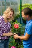Man and woman in greenhouse caring for a rose in a pot. Man and women in greenhouse caring for a rose in a pot royalty free stock photos