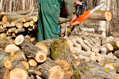 A man in woods sawing Stock Photography