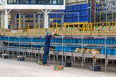 Man at work in Dutch greenhouse with wrapping up peppers Royalty Free Stock Image