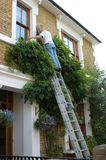 Man at work up a ladder royalty free stock images
