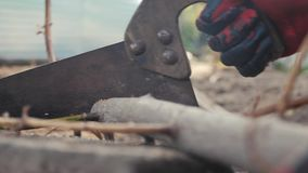 Man worker sawing sawing a tree branch with his hands. hand work hacksaw man sawing lifestyle wood close-up slow-motion stock video