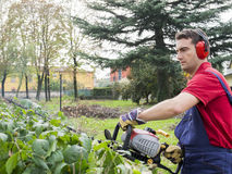 Man working bush trimmer Royalty Free Stock Photo