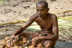 Man working on coconut plantation Royalty Free Stock Photo