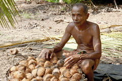 Man working on coconut plantation Royalty Free Stock Photos
