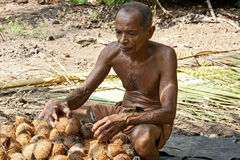 Man working on coconut plantation Royalty Free Stock Images