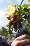 Man working in garden Royalty Free Stock Image