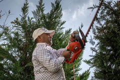 Man working in the garden cutting the trees royalty free stock image
