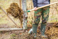 Man working in garden with fork. Fertilization of garden with ecological compost Stock Photo