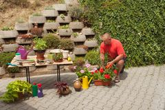 Man working in garden. Gardener offsets flowers. Royalty Free Stock Photo