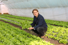 Man working in a greenhouse Stock Photos