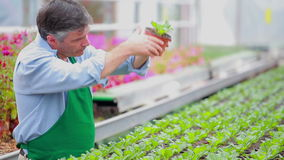 Man working at the greenhouse Royalty Free Stock Photos
