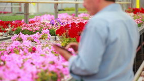 Man working at a greenhouse holding a tablet pc Royalty Free Stock Photography