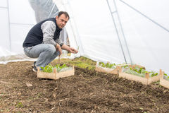 Man working in greenhouse stock photography