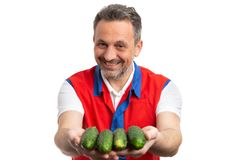 Man working at grocery store presenting cucumbers. Friendly man working at grocery store or supermarket presenting green cucumbers as healthy concept isolated on royalty free stock images
