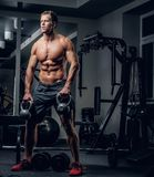 A man working hard in a gym club. Shirtless muscular male working hard in a gym club Royalty Free Stock Image