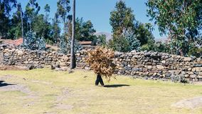 Man working hard in Peru. In the north of Peru, man is transporting wood for heat and meals in June, dry and cold season in South America Royalty Free Stock Photography