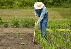 Man working in his garden Stock Image