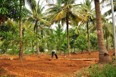 Man working on organic tropical farm. Man working on an organic farm, watering  the soil Royalty Free Stock Photos