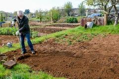 Gardener working in a community garden stock photos