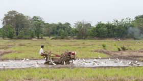 A man working in a rice field, Sri Lanka Royalty Free Stock Photos