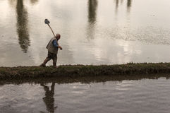 Man working rice paddy. Man walking on earthen berm between rice paddies with shovel on overcast day Stock Photo