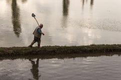 Man working rice paddy Stock Photo