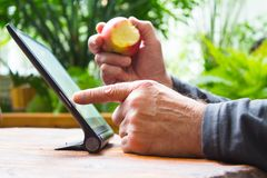 Man working on tablet computer with bitten apple in his hand. Wooden table. Green garden background. stock image