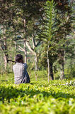 Man working on a tea plantation Stock Photography