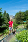 Man working in vegetable grden Royalty Free Stock Photography