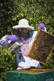 Man works in an apiary collecting bee honey stock images
