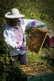 Man works in an apiary collecting bee honey stock photo