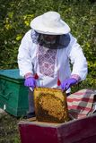 Man works in an apiary collecting bee honey royalty free stock images