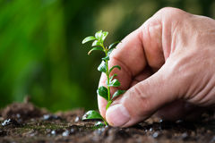 Man's Hand Planting Small Tree On Ground Royalty Free Stock Images