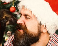 Man in xmas hat plays with puppy. Santa gets kisses. From little dog. Xmas holiday concept. Guy with happy face cuddles with doggy on Christmas tree background stock image