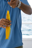 Man with yellow fish Stock Photo