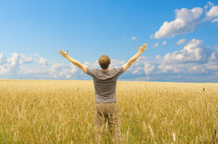 Man in yellow meadow. Man in yellow wheat meadow royalty free stock photos