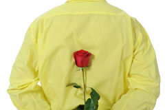 Man in a yellow shirt holding a red rose Stock Image