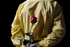 Man in a yellow shirt holding a red rose Royalty Free Stock Photography