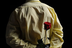 Man in a yellow shirt holding a red rose Stock Photography