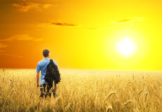 Man in yellow wheat meadow. Royalty Free Stock Photography