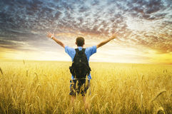 Man in yellow wheat meadow. Stock Images