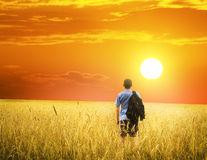 Man on yellow wheat meadow. Stock Images