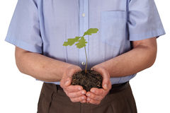 Man with young oak tree Stock Photo