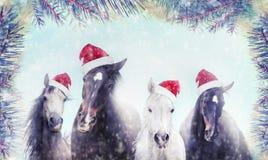 Manada de caballos con el sombrero de Papá Noel en nieve del invierno y fondo del árbol de navidad bandera Imágenes de archivo libres de regalías