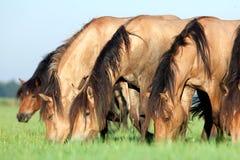 Manada de caballos en campo Imágenes de archivo libres de regalías
